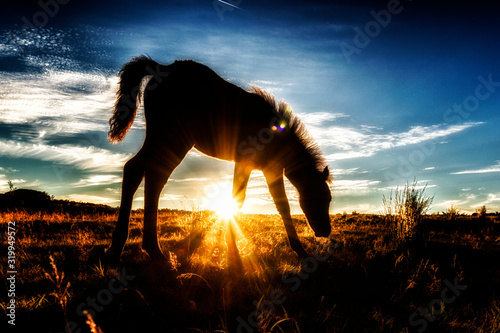 Fotografia Silhouette Horse Grazing On Field Against Sky During Sunset