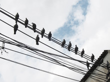 Low Angle View Of Pigeons Perching On Wires Against Sky