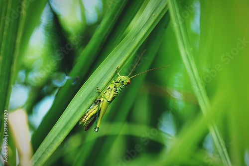 Close-Up Of Grasshopper On Plant Fototapet