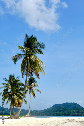 A shot of Palm Trees on an Empty White Sand Beach on a sunny day.