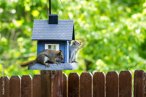 Obraz na plátně Squirrels On Birdhouse In Back Yard