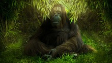 Gorilla Relaxing On Grassy Field
