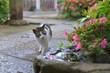 Cat Walking On Footpath By Flowers