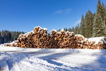 Forest Pine Trees Log Trunks F...