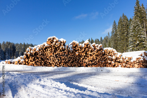 Photographie Forest pine trees log trunks felled by the logging timber industry covered with