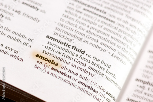 Photo The word or phrase Amoeba in a dictionary.
