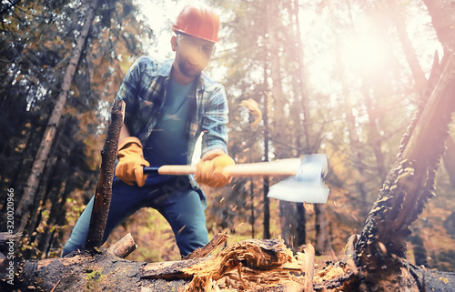 Photo Male worker with an ax chopping a tree in the forest.