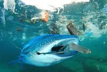 Plastic Ocean Pollution. Whale...