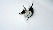 High Angle View Of Dog On Snow...