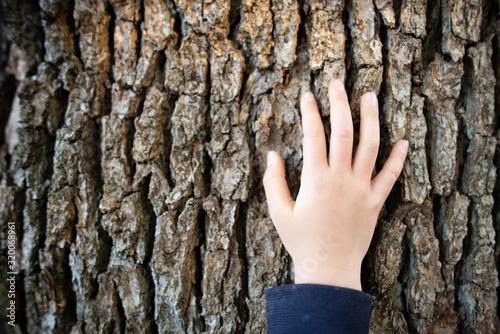 Fotomural 木に触る子供の手