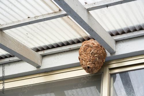 Valokuvatapetti 蜂の巣