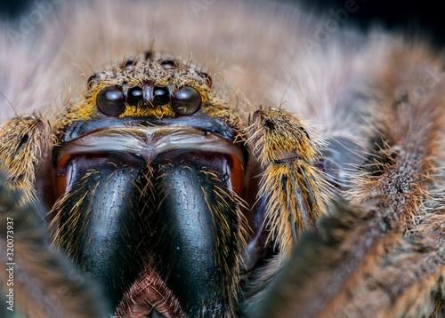 CLOSE-UP PORTRAIT OF SPIDER Fotobehang