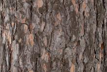 Pine Tree Bark Texture Macro
