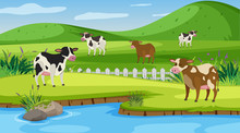 Background Scene With Many Cow...