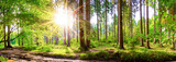 Fototapeta Las - Beautiful forest in spring with bright sun shining through the trees