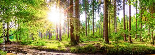 Piękny las na wiosnę z jasnym słońcem świecącym przez drzewa