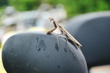 Close-Up Of Praying Mantis On Wet Seat