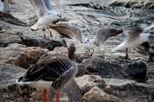 Close-up Of Seagulls Landing O...