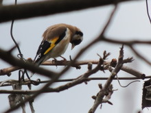 Low Angle View Of Gold Finch Perching On Dried Plant