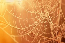 Close-Up Of Spider Web