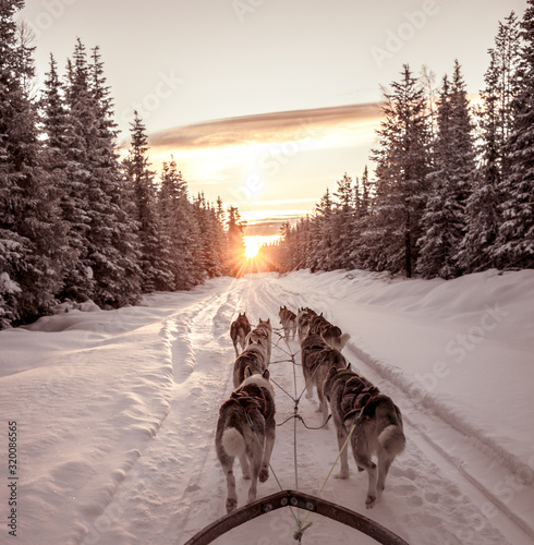 DOG ON SNOW COVERED LANDSCAPE DURING SUNSET - fototapety na wymiar