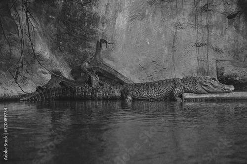 Canvas Print Close-Up Of Crocodile On Lake