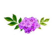 Beautiful Purple Flowers On Wh...
