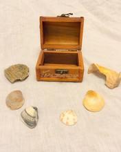 High Angle View Of Seashells With Box