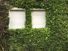 Close-Up Of Windows Of Ivy Covered Building