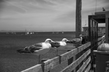 Seagulls Perching On Wooden Railing Against Sea