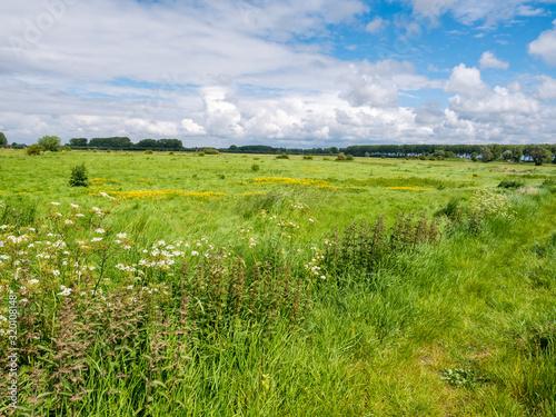 Canvas Print Landscape with green fields in polder near Damme in West Flanders, Belgium