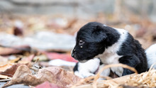 Puppies Are Looking For A Mother Dog