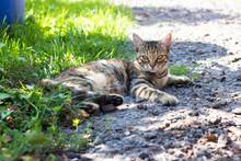 Beautiful Young Cat Lying In T...