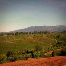 Costa Rican Coffee Plantation ...