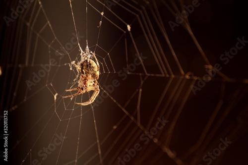 Vászonkép Close-Up Of Spider On Web