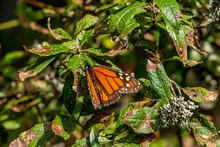 A Closeup Of A Bright Orange M...