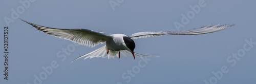 Photo Low Angle View Of Arctic Tern Flying Against Sky