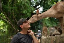 Little Deer Licks An Ear To A ...