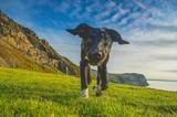 Fototapeta Psy - dog ON GRASSY FIELD AGAINST CLOUDY SKY