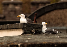 Seagulls Perching On Rooftop