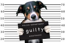 Bad Dog At Police Station
