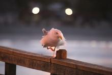 Close-Up Of Bird Perching On Railing