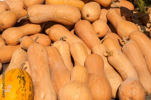 Photo Pile of butternut Matilda pumpkins closeup as background