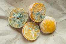 Trend - Ugly Food. Four Halves Of A Spoiled Lemon With Mold Close-up On Crumpled Paper