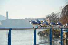 Seagull Perching On Railing Over Lake