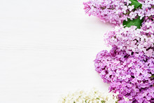Spring Lilac Flowers On White ...