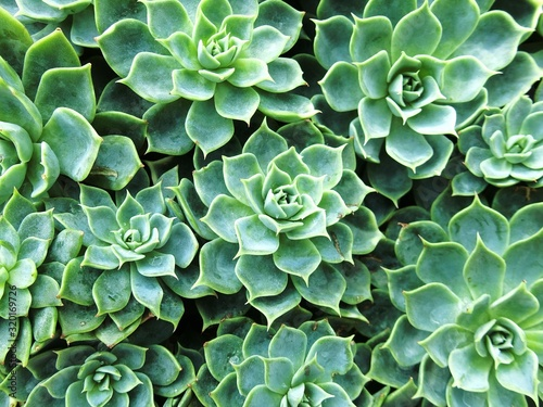 Obraz Full Frame Shot Of Cactus - fototapety do salonu