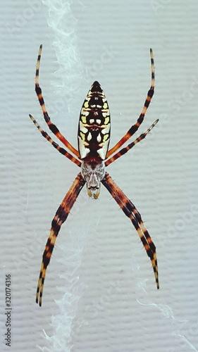 Fényképezés Close-Up Of Yellow Garden Spider On Glass