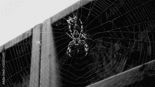 Fotografia CLOSE-UP OF SPIDER ON WEB