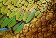 Extreme Close-Up Of Kea Bird